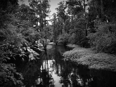 Lettuce Lake Number One Art Print by Phil Penne