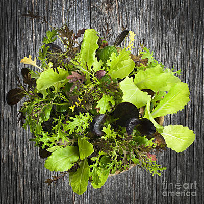 Lettuce Seedlings Art Print by Elena Elisseeva