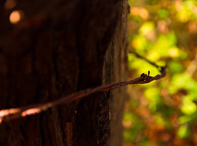 Photograph - Levitation by Haren Images- Kriss Haren