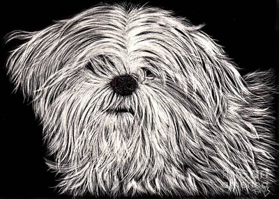 Drawing - Lhasa Apso by Terri Mills