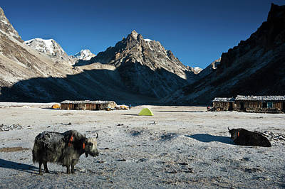 Photograph - Lhonak Camp At 4750 M by Ducoin David