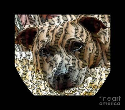Photograph - Li Ti Dog by Renee Trenholm