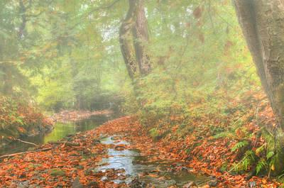 Photograph - Liberton Woods by Jean-Noel Nicolas