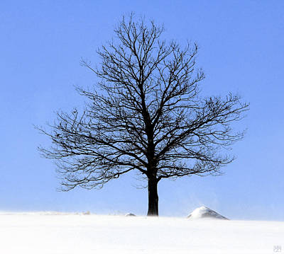 Photograph - Liberty Tree Winter by John Meader
