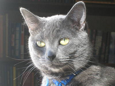 Photograph - Library Cat by Jennifer E Doll
