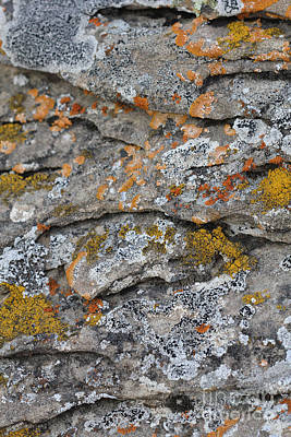 Photograph - Lichen #4 by Donna Munro
