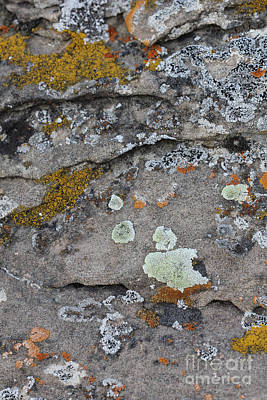 Photograph - Lichen #5 by Donna Munro