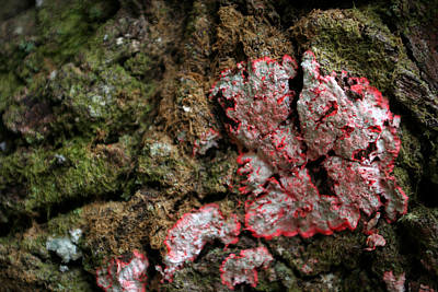 Movies Star Paintings - Lichen  by Allan Lovell