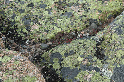 Photograph - Lichen And Granite Img 6187 by Greg Kluempers