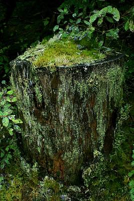 Lichen And Moss Covered Stump Print by Amanda Holmes Tzafrir