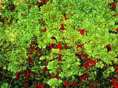 Lichen Art Print by Bob Beardsley