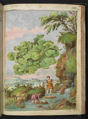 Algal Photograph - Lichen by British Library
