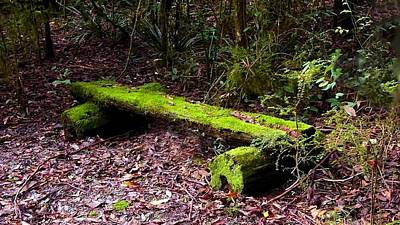 Photograph - Lichen Covered Bench by David Rich