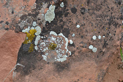 Photograph - Lichen Flower On Rock - Zion National Park by rd Erickson