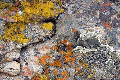 Photograph - Lichen Four by A K Dayton