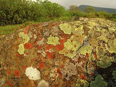 Lichen Growing On Rock In Unpolluted Air Art Print