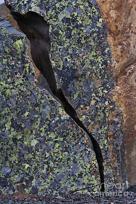 Lichen On Granite Print by Heiko Koehrer-Wagner