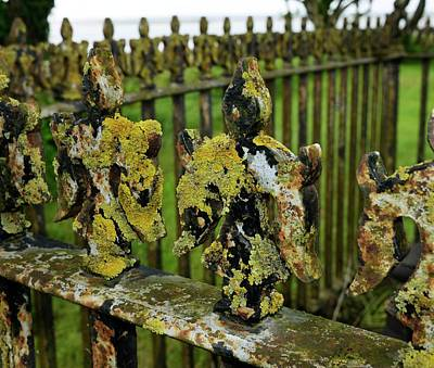 Wrought Iron Fence Photograph - Lichen On Iron Railings In Unpolluted Air by Cordelia Molloy