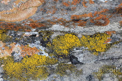 Photograph - Lichen On Rock #2 by Donna Munro