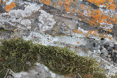 Photograph - Lichen On Rock #3 by Donna Munro