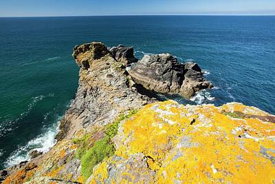 Lichen On Rock Above The Sea Cliffs Art Print by Ashley Cooper