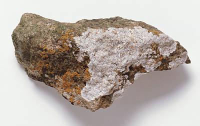 Lichen Photograph - Lichen On Rock by Dorling Kindersley/uig