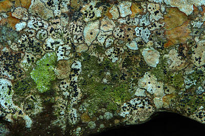 Photograph - Lichen On Rock In Suck Creek by Daniel Reed