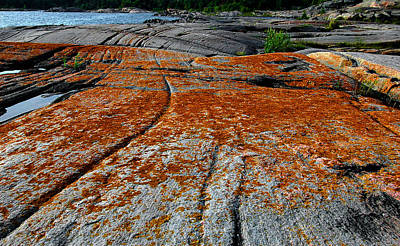 Photograph - Lichen On The Rocks- 2 by Patrick Boening