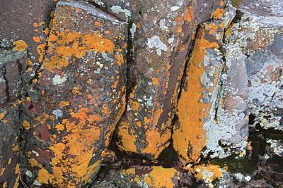 Photograph - Lichen One by A K Dayton