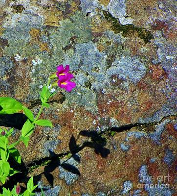 Photograph - Lichen Palette by Michele Penner