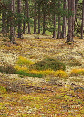 Lichens And Grasses On The Forest Floor Art Print by Louise Heusinkveld