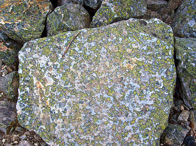 Lichens On A Rock On Consolation Lakes Trail In Banff National Park-alberta-canada  Original
