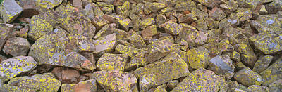 Of Lichens Photograph - Lichens On Rocks At Yankee Boy Basin by Panoramic Images