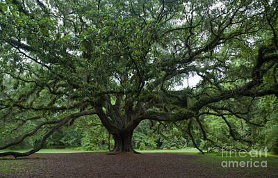 Photograph - Lichgate Oak by Kathi Shotwell