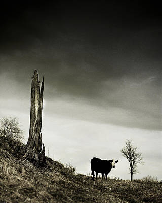 Photograph - Life And Death In The Winter Pasture by Gray  Artus