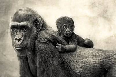 Ape Wall Art - Photograph - L.i.f.e. by Antje Wenner-braun