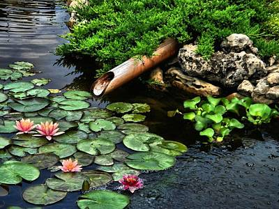 Photograph - Life At The Lily Pond by Andrea Kollo