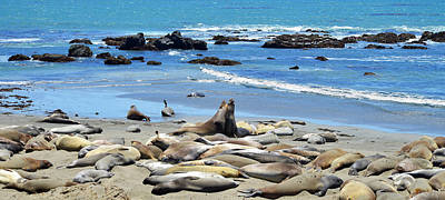 Coast Hwy Ca Photograph - Life At The Rookery by Lynn Bauer