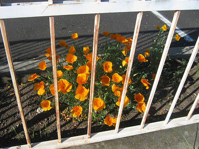 Art Print featuring the photograph Life Behind Bars by Marie Neder