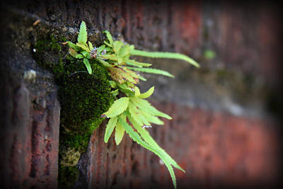 Photograph - Life Between The Bricks II by Kelly Hazel