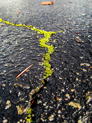 Art Print featuring the photograph Life Between The Cracks by Mike Lee