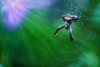 Photograph - Life Down Low by Michael Eingle