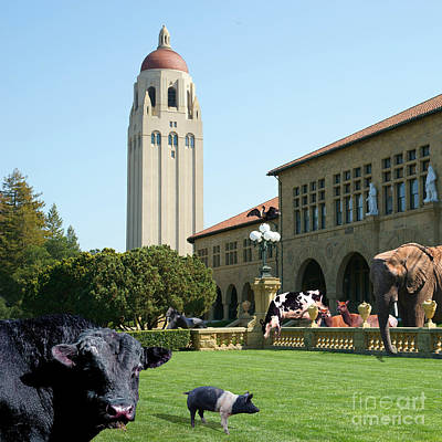 Elephants Digital Art - Life Down On The Farm Stanford University California Square Dsc685 by Wingsdomain Art and Photography