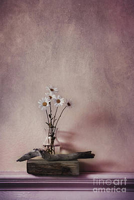 Driftwood Photograph - Life Gives You Daisies by Priska Wettstein