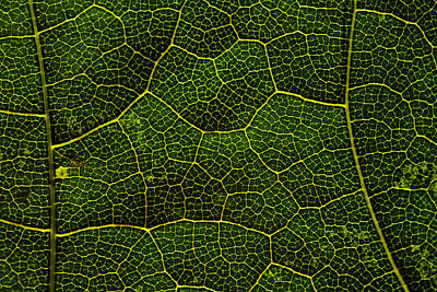 Essence Of Life Photograph - Life Grid In A Leaf by Cristina-Velina Ion