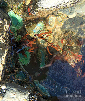 Painting - Life In The Tide Pool by Jeanette French