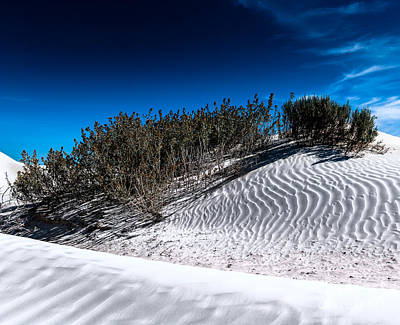Photograph - Life In The White Sands by Julian Cook