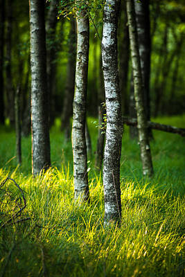 Photograph - Life Is A Birch by Andy Bitterer