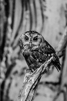 Photograph - Life Is A Hoot by Jason Brow