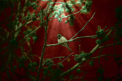 Birds Living In Nature Photograph - Life Is A Song by Bonnie Bruno